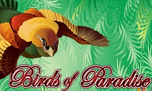 Birds of Paradise Slot Machine Review